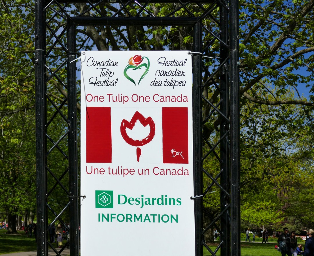 Canada 150 One Tulip One Canada for boomervoice