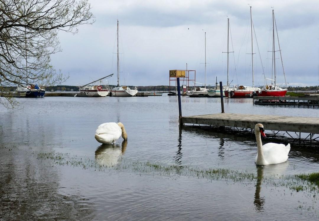 Gosport Marina for boomervoice
