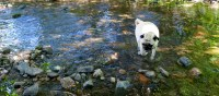 Buddy in MacLellan's Brook at Glenora Distillery for boomervoice