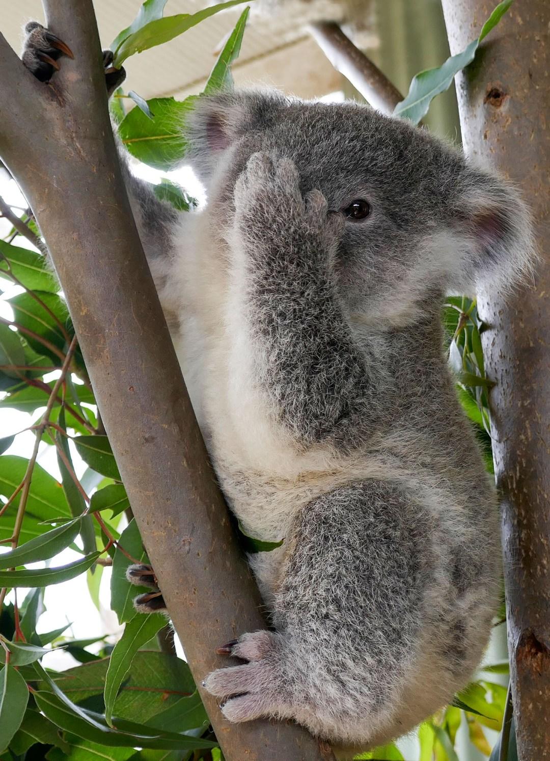 I spy with my little eye at Sydney Wildlife Zoo for boomervoice