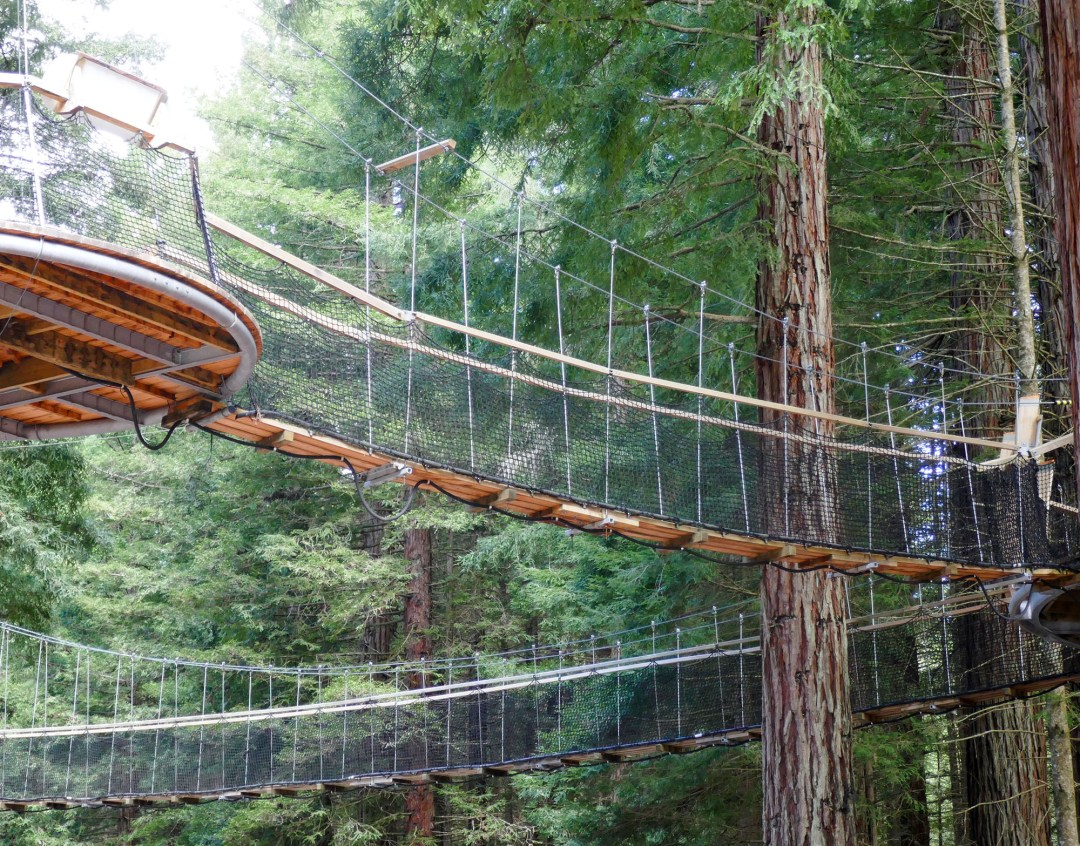 Elevated walk in Redwood forest in Rotorua for boomervoice