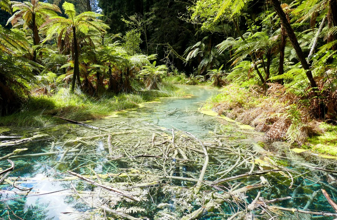Geothermal river in woods in Rotorua for boomervoice