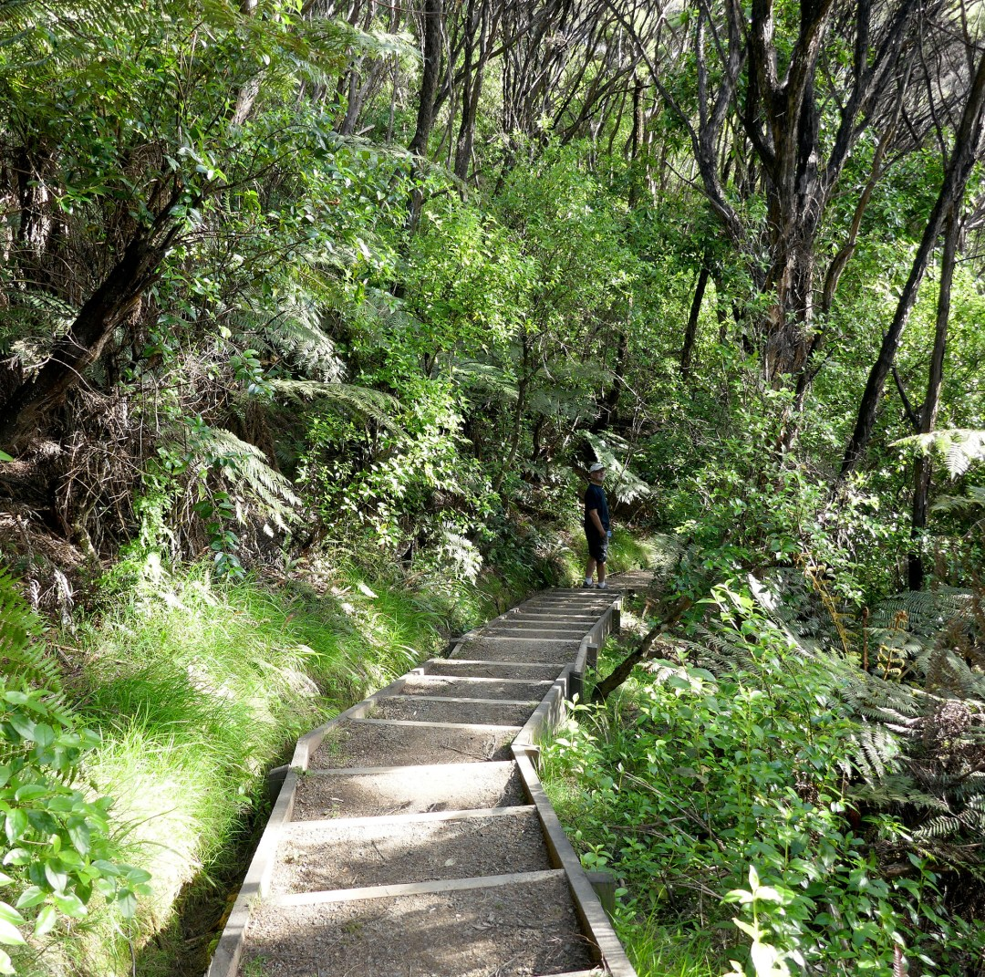 Jungle path in Russell for boomervoice