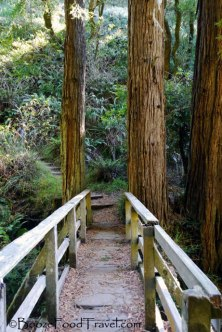redwood-bridge