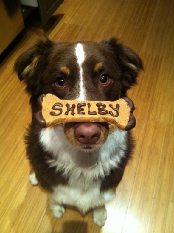 shelby 3 Dog