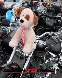 Great-Teddy-Bear-Run-11-15--(84)
