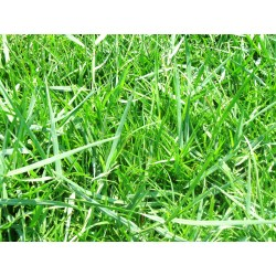 Small Crop Of Bermuda Grass Killer