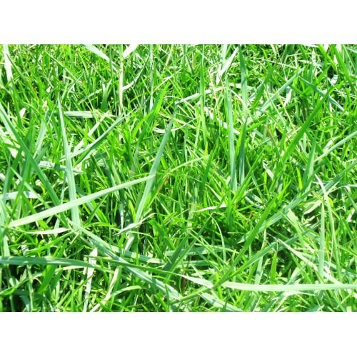 Medium Crop Of Bermuda Grass Killer