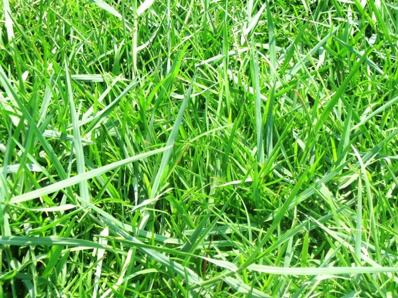 Large Of Bermuda Grass Killer