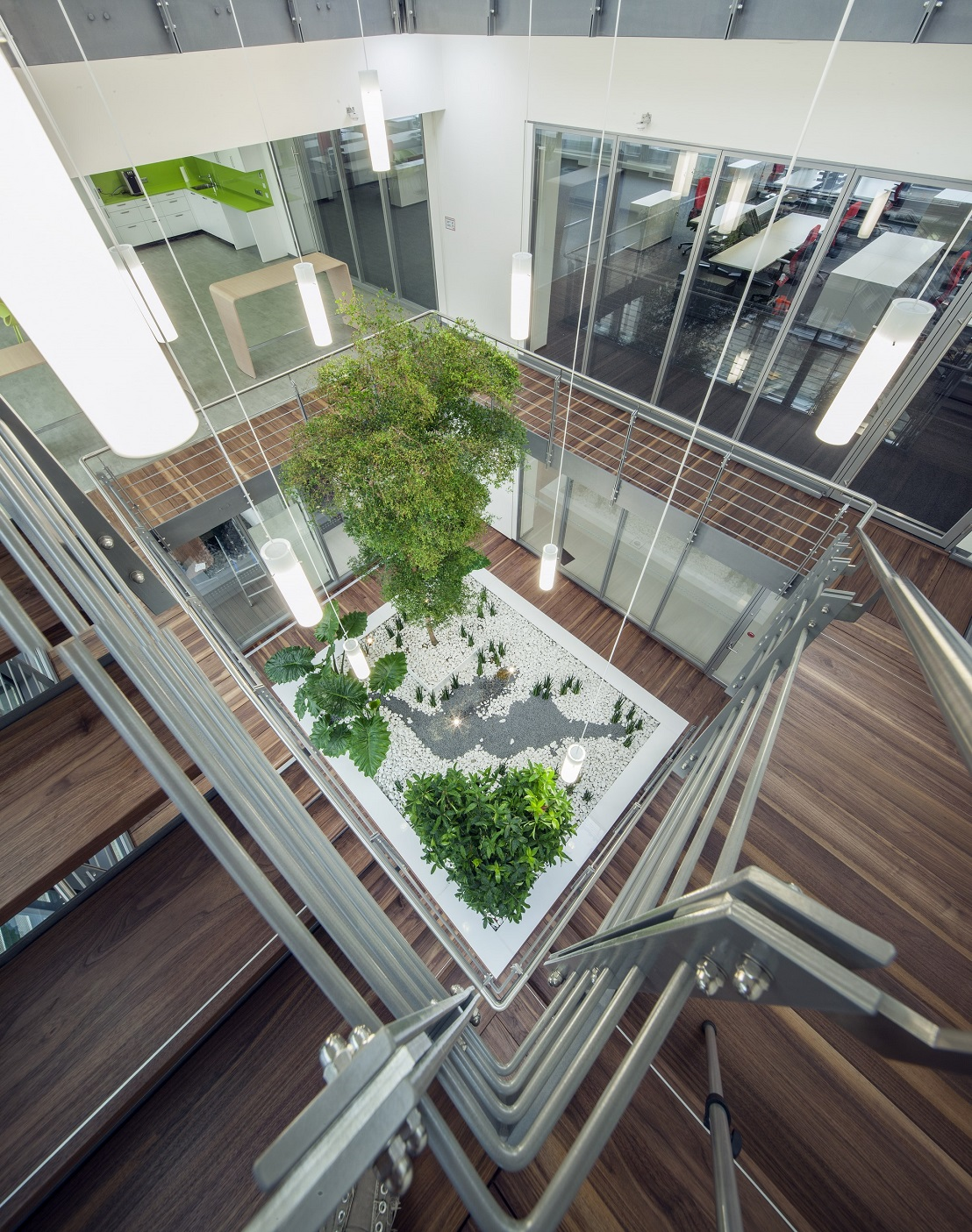 Bambus Pflanzen München Big Tree Interior Indoorlandscaping Atrium Business Private