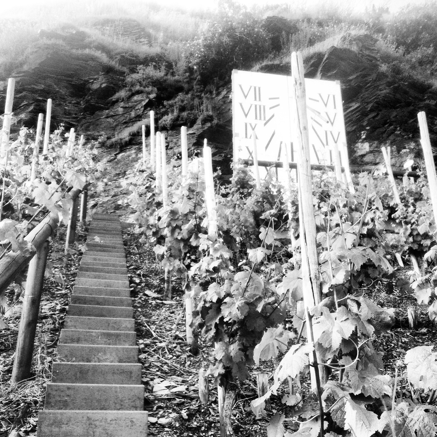 Rock Talk: Slate in Vineyards and the Effects in Wine