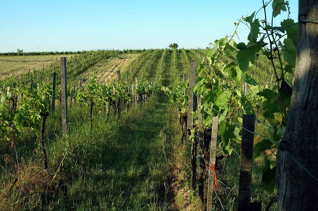 A Brief on 3 Viticulture Methods: Sustainable, Organic, Biodynamic