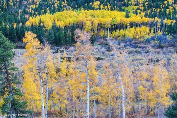 Rocky Mountain Autumn Contrast