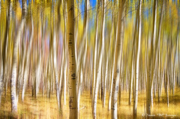 A Surreal Aspen Tree Abstract View