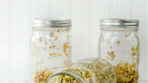 Growing Sprouts  Homemade Sprouting Jars {tutorial} - Step by Step