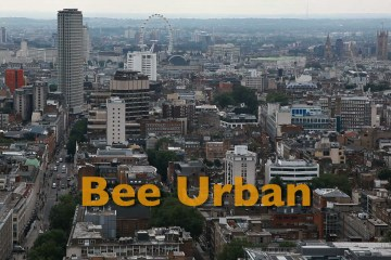 Bee Urban pic