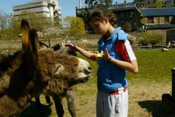 emma donkey