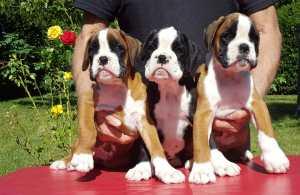 cuccioli 1