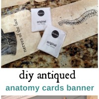 DIY Anatomy Flashcards: Wherein I take craftiness to new (for me) levels