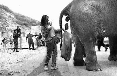 elephant dick cumming