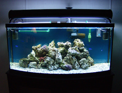 20 gallon saltwater fish only tank artificial coral reef for 20 gallon saltwater fish tank