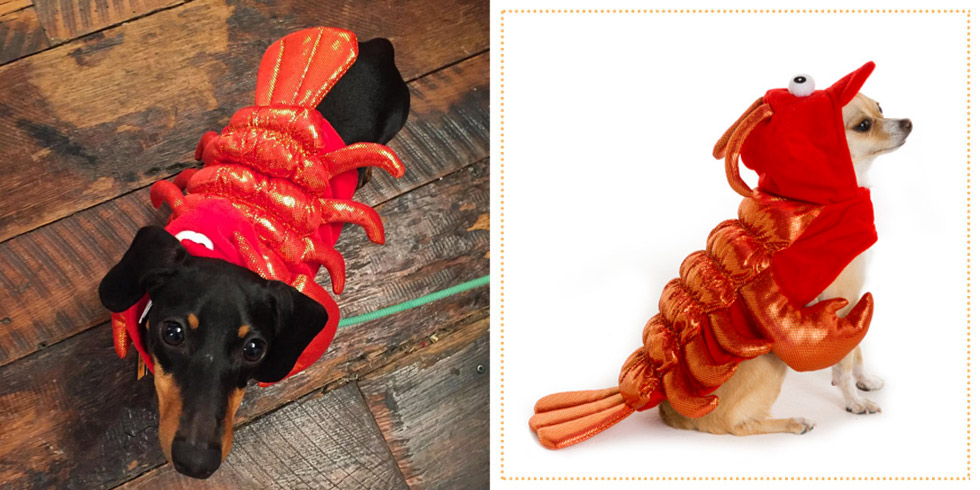 29 Best Dog Costumes for Halloween 2017