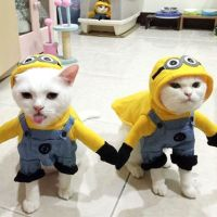 14 Best Cat Costumes for Halloween 2018 - Hilarious ...