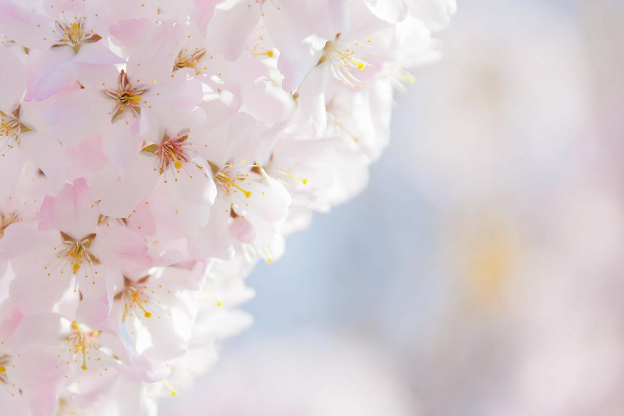 Rosas Wallpapers 3d תמונות ורקעים לברכות פרחים לבנים