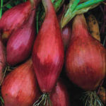 Long red shallots (per kg)