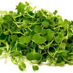 Micro Herbs (small box)