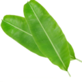Banana leaves (per kg)