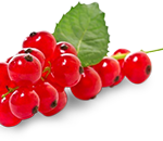 Red currants (per punnet)