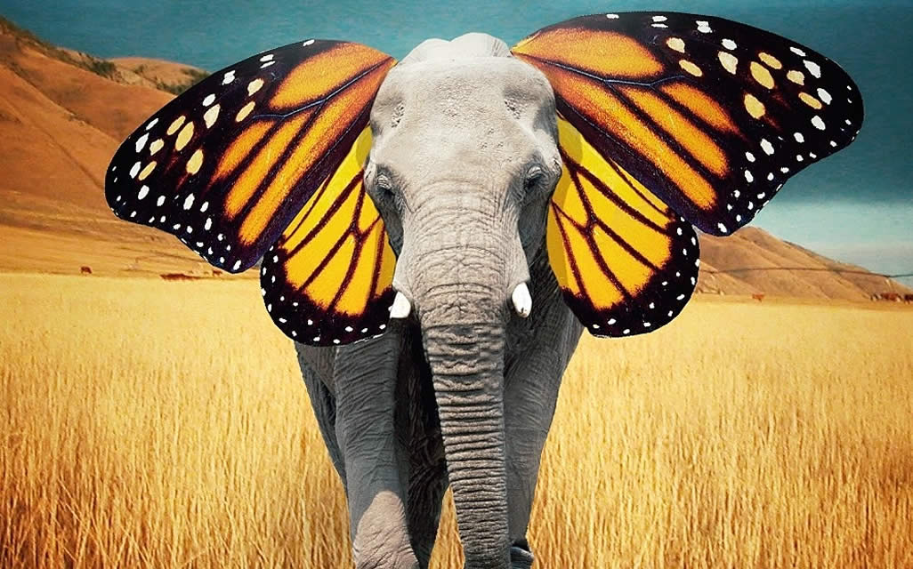 Maruti Zen Car Wallpapers Robert Jahns Elephant Butterfly Ears Branding In Asia