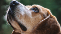 31 Dog Day Care Industry Statistics and Trends ...