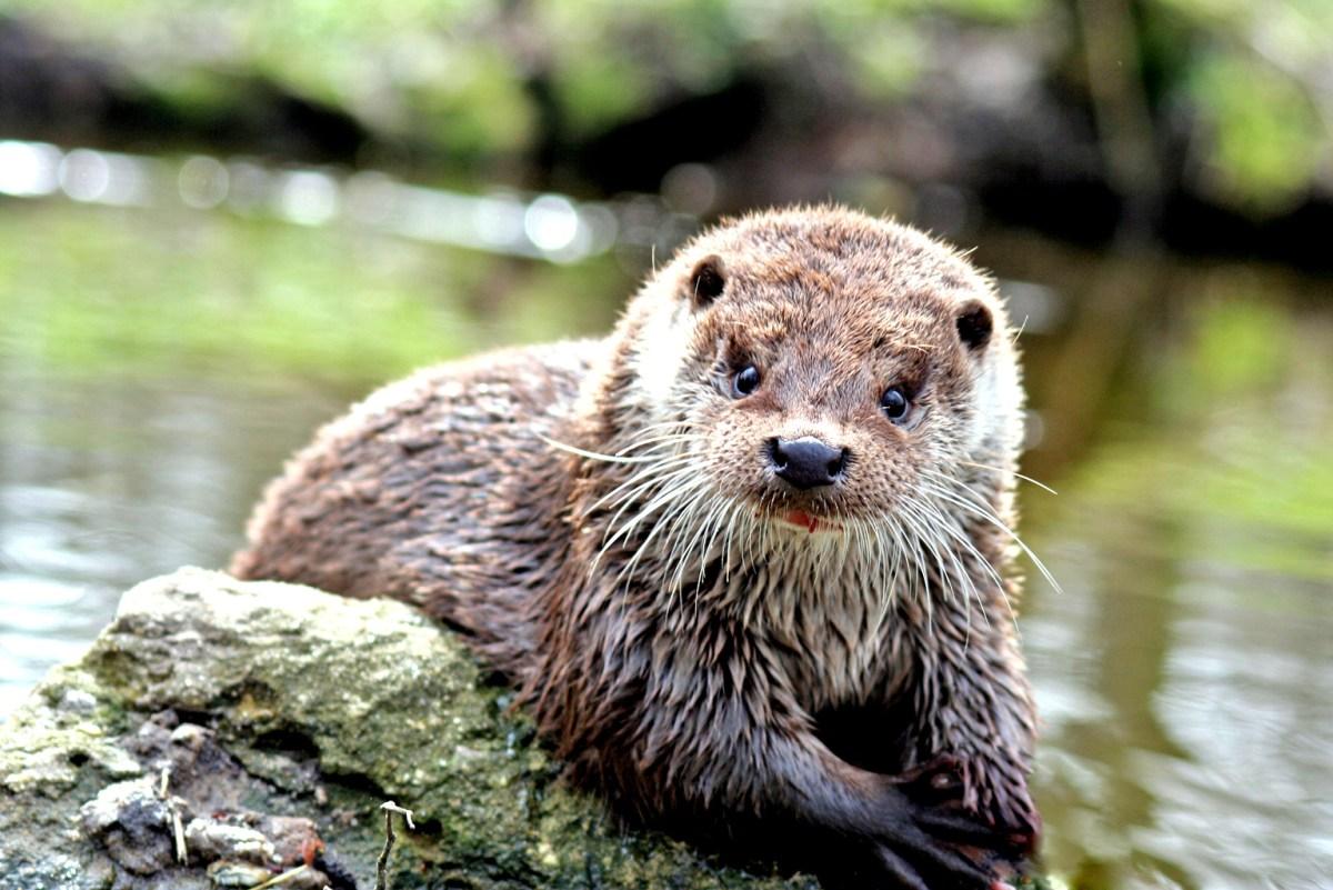 02.08.2016: Nächtliche Expedition ins Otter-Zentrum Hankensbüttel