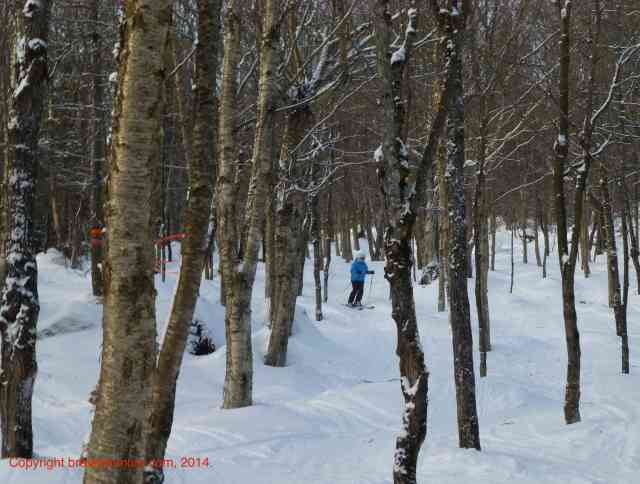 ski stoneham tree glades