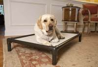 5 Really Indestructible Dog Beds (+ The Kong Dog Bed)