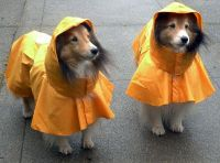 Top 5 Best Waterproof Dog Raincoats With Hood  2018 EDITION