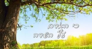טו בשבט הגיע! | כי האדם עץ השדה — המסר של טו בשבט