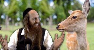 Rav Dror and the Dying Deer