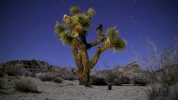 Mojave Reds