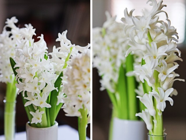 Brewed-Together-Hyacinth-Tube-Bouquet-13