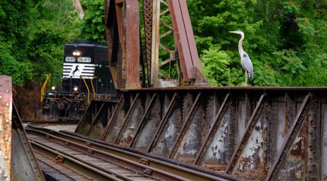 A Thoroughbred versus a Heron.