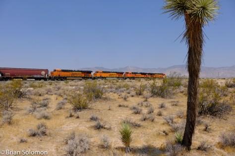 BNSF_earthworm_grain_train_Mojave_w_Joshua_Tree_DSCF0992