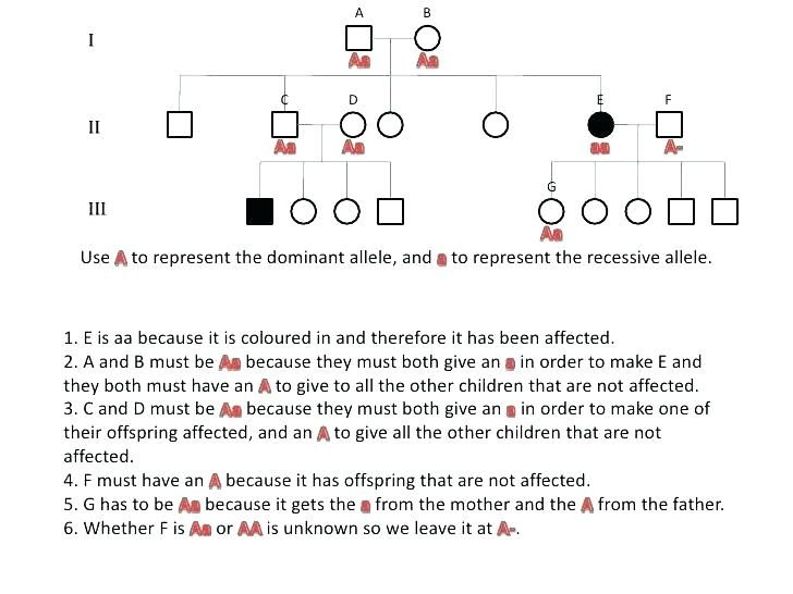 Genetics Practice Problems Worksheet Key - Briefencounters Worksheet