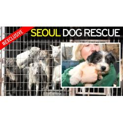 Small Crop Of Dog Rescue Videos