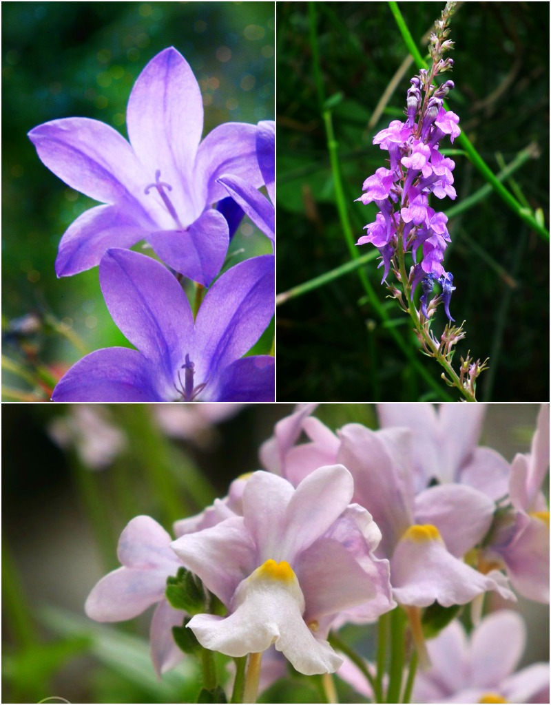Flower Photography Tips and Tricks