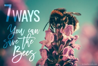 7 ways You can help Save the Bees l britneytermale.com