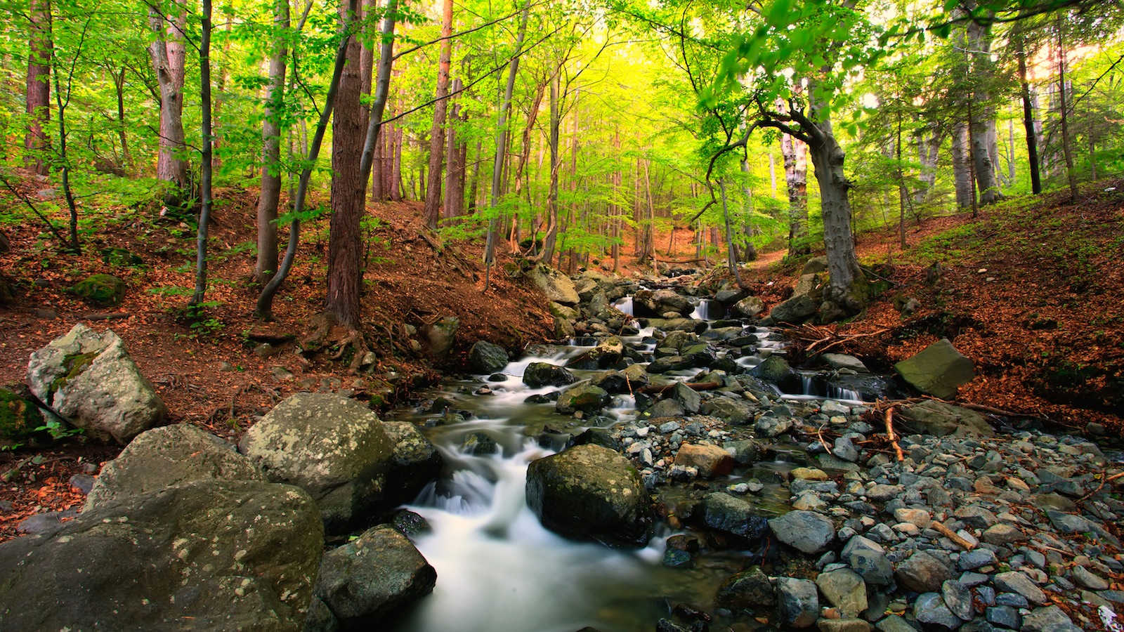 Fall Cabin Wallpaper Research Points To Importance Of Tree Cover For Stream