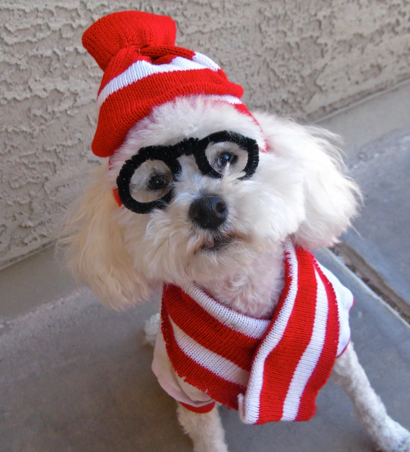 Last Minute DIY Halloween Costumes for Your Dog
